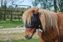 Equilibrium Midi Fly Mask( in sizes from Miniature)