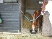 Stable / Stall Chain
